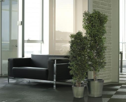 Arbuste Tenuifolium slim vert  en 130 cm + pot