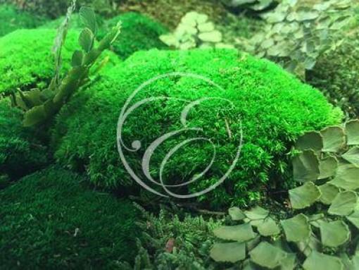 Mur végétal chez un particulier 5