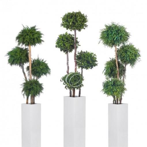 Végétal stabilisée